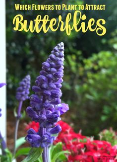 Which Flowers to Plant to Attract Butterflies in your garden?  Here's a list of our favorite that the kids plant with me to inspire eco friendly learning at home plus a few fun books that go with the garden too.