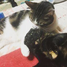 . . この顔😂😂😂笑 . 最近はじめちゃんの食欲がすごい😯! . . #保護猫#猫#ネコ#ねこ#関西#にゃんこ#女の子#男の子#さびがら#サビ猫#キジシロ#ハチワレ#関西ねこ部#にゃんすたぐらむ#ねこすたぐらむ#みんねこ#japan#cat#냥스타그램#ねこ部#ねこ#猫#catsofinstagram #catstagram#cats#catlover#girl#고양이#愛猫#猫好きさんと繋がりたい