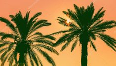 Date palm tree against colorful sky with sunset sun. Beautiful n - Stock , Indesign Magazine Templates, Birds In Flight, Palm Trees, Fine Art Prints, Scenery, Dating, Sky, Colorful, Stock Photos