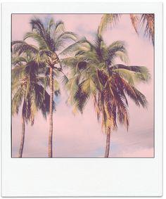 polaroid // palm trees