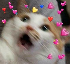 60 Ideas for memes apaixonados gatos Cute Cat Memes, Cute Animal Memes, Cute Love Memes, Cute Funny Animals, Cute Baby Animals, Funny Cats, Funny Animal Pictures, Cute Baby Cats, Cute Kittens