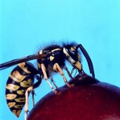 How to Get Rid of Wasps Without Killing Them (an awesome recipe for a natural bug repellant)