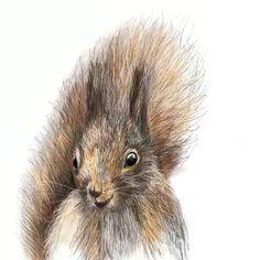 The process of creating a cute squirrel print for a gender neutral nursery or a beige nursery. Digitally hand drawn using IPad Pro. Baby Animal Nursery, Baby Animals, Cute Animals, Ipad Video, Cute Squirrel, Squirrels, Beige Nursery, Baby Animal Videos, Woodland Nursery Prints