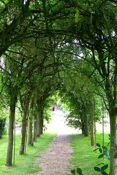 ♕ gorgeousLabernum Arch, Gilbert White's Home, The Wakes, Selborne, Hampshire