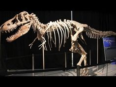 Dinosaur bones from Mongolia spark international dispute