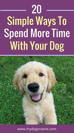 Do you ever wish you could spend more time with your dog? Now you can with these 20 simple ideas.