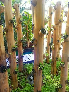 Find the Inspirations of Newly Planted Bamboo Vertical Garden Ideas Here >> Aquaponics System, Aquaponics Greenhouse, Aquaponics Diy, Vertical Garden Diy, Diy Garden, Garden Landscaping, Garden Ideas, Garden Farm, Vertical Planter