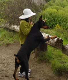 #Doberman with a girl