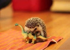 How the dinosaurs became extinct.