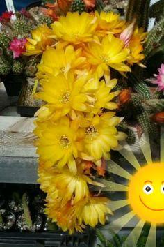 Good Morning Beautiful Gif, Good Morning Images Hd, Good Morning Gif, Good Morning Flowers, Good Morning Greetings, Morning Pictures, Beautiful Flowers Garden, Amazing Flowers, Beautiful Birds