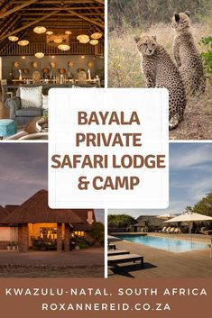 Visiting KwaZulu-Natal and looking for a South African safari? Find out why you should consider Bayala Lodge at the Big 5 Zuka Private Game Reserve in Zululand. See the Big 5 and more, find lots of things to do: game drives, bush walks, nature, a spa, a rhino experience, swim in the pool and enjoy good food in the restaurant, or plan a wedding. #KwaZuluNatal #KZN #safari Wildlife Tourism, Wildlife Safari, Private Safari, All About Africa, Okavango Delta, Kwazulu Natal, Slow Travel, Kruger National Park, Big 5