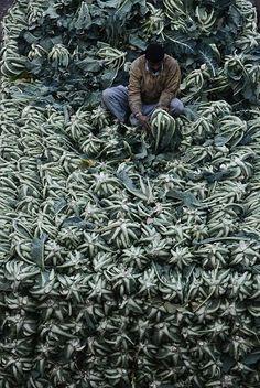 Green Market Cauliflowers, Lahore, Pakistan