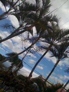 Palm trees by a beach.
