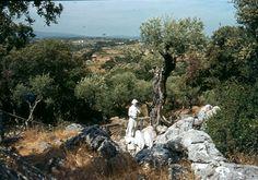 fatima- schöne landschaft portugal-