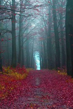 Autumn woods, Germany (by Jonathan Manshack)