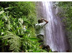 Rainforest In Waikiki Hawaii | ... Waikiki tours & activities, things to do in Oahu / Waikiki | Hawaii