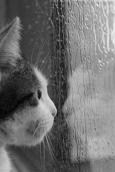 Rainy Day Kitten
