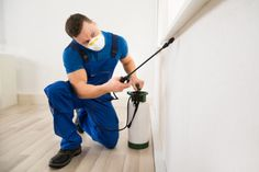 Dhawan Pesticides offer reliable service of termite control treatment in Delhi NCR. We also offer pest control, anti-termite control and termite treatment in Delhi. Contact us today! Best Pest Control, Pest Control Services, Bug Control, Drywood Termites, Termite Control, Bees And Wasps, Pest Management, Humming Bird Feeders, Baton Rouge