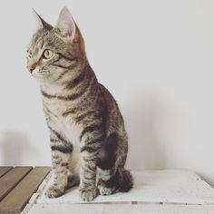 Little Lucky #throwbackthursday  #luckythecat #love #cute #catsofsalzburg #unterfoehring #germany #cat #meow #ilovemypet #catlovers #lovekittens #instapet #catsagram #kitten #kitty #catstagram #kittycat #catsofinstagram #ilovemycat #catlove #catoftheday #furry #cats_of_instagram #cats #catlife #katze #katzenliebe #miezekatze