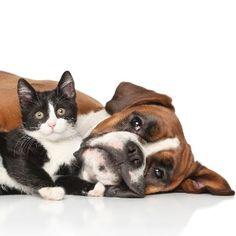 Sob a ótica de cães e gatos: você sabe como seu bicho enxerga o mundo? - 06/05/2016 - UOL Estilo de vida