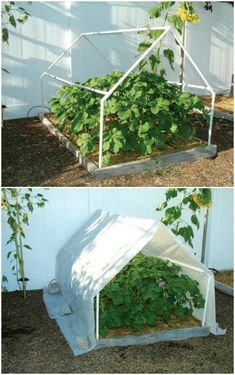 If you love gardening and are thinking about building your own hot house greenhouse here is some build backyard sheds advice to consider in your planning stage. Diy Greenhouse Plans, Large Greenhouse, Cheap Greenhouse, Greenhouse Effect, Build A Greenhouse, Indoor Greenhouse, Greenhouse Gardening, Homemade Greenhouse, Greenhouse Wedding