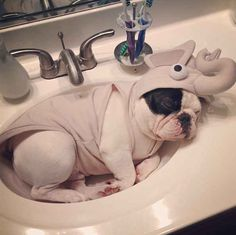 A Frenchie dressed up as an elephant lying in the sink.