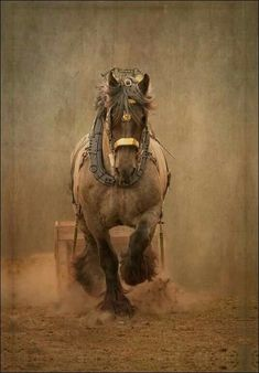 My Great great Grandfather loved training horses, and He Loved his Draft horses. Big Horses, Work Horses, Horse Love, Black Horses, All The Pretty Horses, Beautiful Horses, Animals Beautiful, Horse Photos, Horse Pictures
