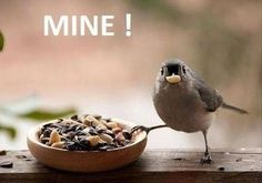 Trendy Ideas For Funny Bird Pictures Humor People Little Birds, Love Birds, Beautiful Birds, Animals Beautiful, Beautiful Pictures, Beautiful Creatures, Birds Pics, Pretty Photos, Beautiful Things