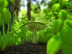 So Shroomy #mushrooms