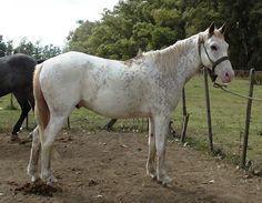 POTRO OVERO ROSADO listo para domar Horses, Animals, Horses For Sale, Animais, Animales, Animaux, Animal, Horse, Dieren