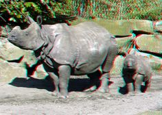 https://flic.kr/p/dZPVJx | Rhinoceros Blijdorp 3D | Blijdorp Zoo Rotterdam anaglyph