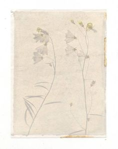 An anthotype is a photograph created using liquidated plant matter. Image from alternative photography.com