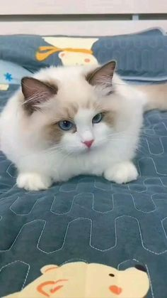Funny Cute Cats, Cute Baby Cats, Cute Little Animals, Cute Cats And Kittens, Cute Funny Animals, Kittens Cutest, Funny Kittens, Pretty Cats, Beautiful Cats