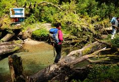 fotos Bosque Encantado, Queulat