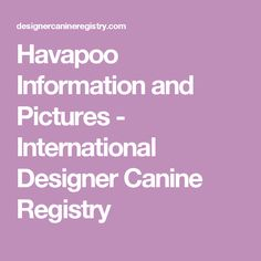 Havapoo Information and Pictures - International Designer Canine Registry Havapoo Puppies, Cockapoo Puppies, Bag Worms, Dog Love, Pictures, Boston, Design, Happiness, Gardening