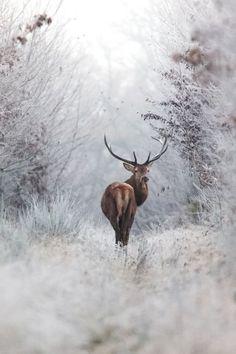 Winter wonderland | #photography #winter