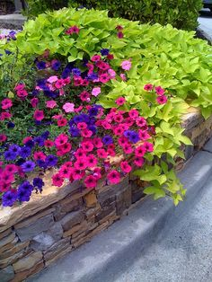 Petunias and sweet potato - would look lovely in the brick boxes in the back garden
