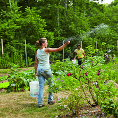biodynamic gardening - bring the practices of Biodynamic Gardening to your own garden