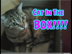 FunCat Friday:  CAT IN THE BOX!!!