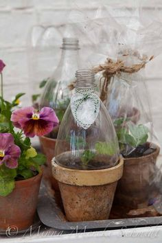 Miniväxthus | blomsterverkstad