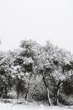 White - Pinned by Mak Khalaf Abstract forestgalilisraelsnowtreewhitewinter by DavidArbitman More Photos, Black And White, Abstract, Photography, Outdoor, Summary, Outdoors, Photograph, Black N White
