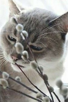 Spring Day, Pantone Color, Cats And Kittens, Kitty, Cute, Animals, Gray, Neutral, Boards