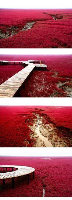 Red Sea-beach, China
