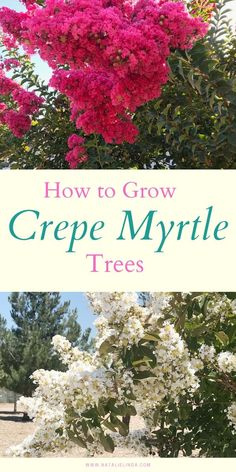 Crepe myrtle trees are incredibly low-maintenance and resilient! They thrive in full sun and bloom throughout the Summer. Learn how to care for a crepe myrtle tree with this guide! Gardening How to Grow Crepe Myrtle Trees Backyard Garden Landscape, Lawn And Garden, Backyard Landscaping, Crepe Myrtle Landscaping, Shaded Garden, Backyard Trees, Crepe Myrtle Trees, Crepe Myrtle Bush, Shade Loving Shrubs
