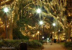 Winter wonderland ~  downtown Tallahassee and the Chain of Parks – beautiful shot! #HolidayHaul #IHeartTally