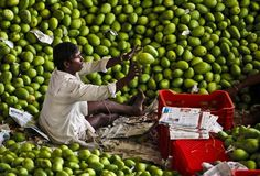 An Indian worker sorts mangoes at a wholesale fruit market in Hyderabad, India