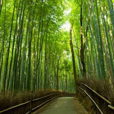 Arashiyama Bamboo Grove, Japan This bright green bamboo grove will transport you to a magical world. It's located in Kyoto, Japan. This bright green bamboo grove will transport you to a magical world. It's located in Kyoto, Japan. Amazing Destinations, Travel Destinations, Travel Deals, Wonderful Places, Beautiful Places, Amazing Places, Amazing Photos, Places To Travel, Places To See