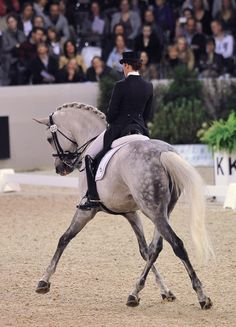 I can't resist a gorgeous grey dressage horse