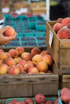 ...buy fresh Maine produce at local farmer's markets. These lovely peaches are at the market at Monument Square in Portland. Photo Credit: Stacey Cramp