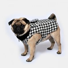 www.chezvalde.com Jumpin Jaxx - Hounds Tooth Hounds Tooth, Dogs, Clothing, Outfits, Pet Dogs, Doggies, Outfit Posts, Kleding, Clothes